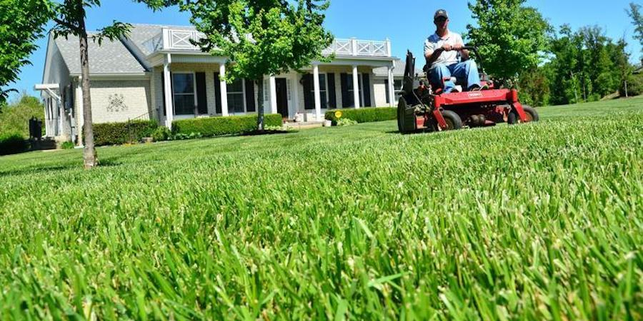 Mowing Saint Augustine Grass Without A Catcher