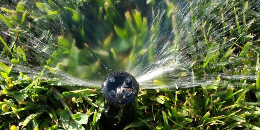 Watering Schedules For New Saint Augustine Sod