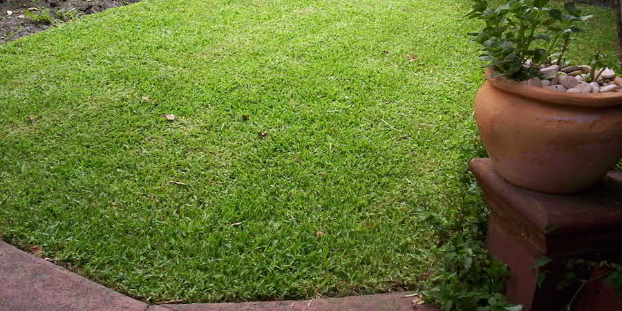 Should I Choose St Augustine Grass