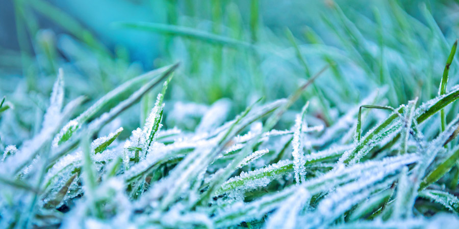 Saint Augustine Grass Winter Lawn Care