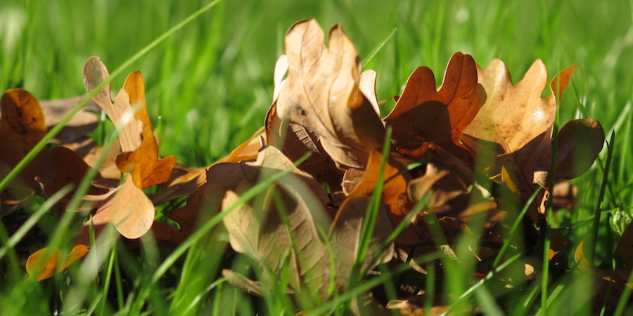 Fertilize Lawns In Fall For Greener Lawns In Spring