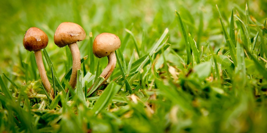 Lawn Care To Control St Augustine Lawn Disease
