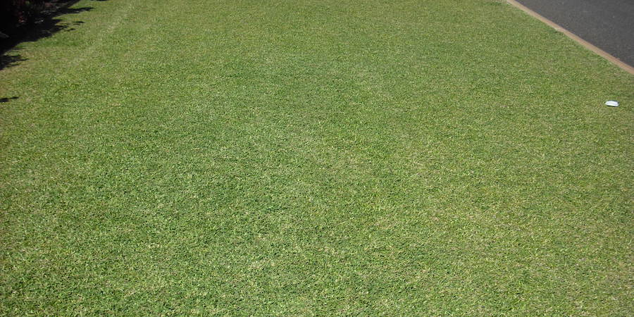 Lawn Mowing Heights for Saint Augustine Grass