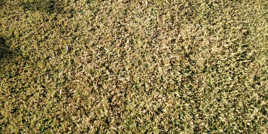 Lawns Turning Brown - Reasons and Solutions